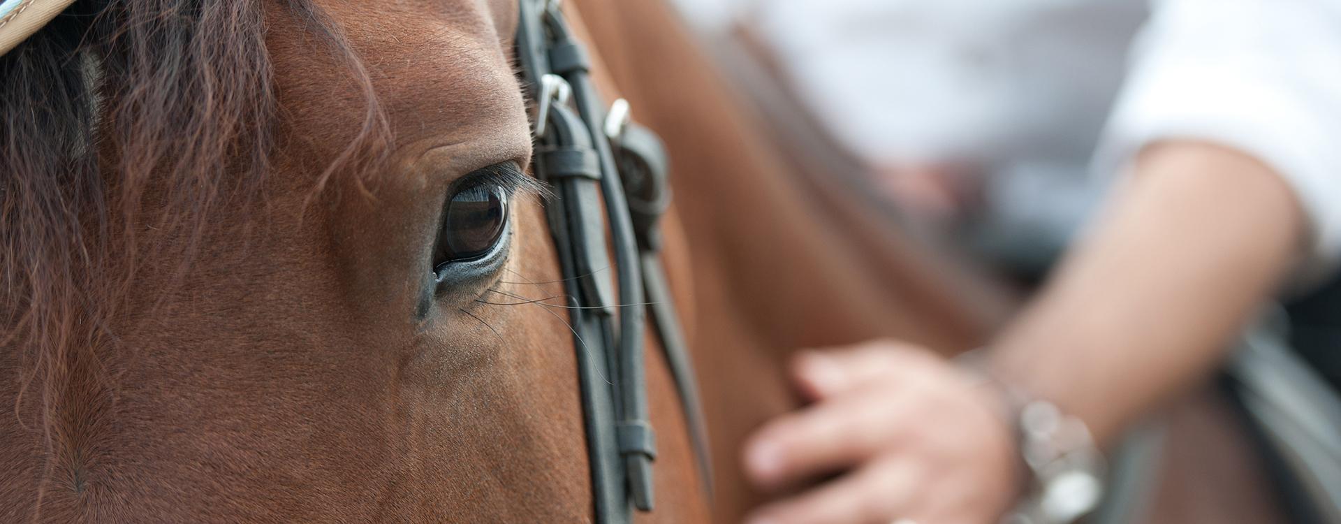 horse – 1920×750